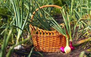 Хороший урожай лука. Несекретные материалы