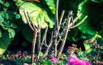 Осенняя обрезка роз: правила и полезные советы для начинающих садоводов