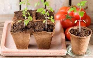 Тонкости выращивания рассады помидоров