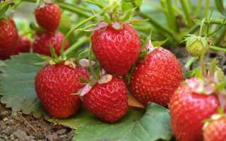 Грядки для клубники: какие, из чего и где. А также полезная информация про выращивание ягод