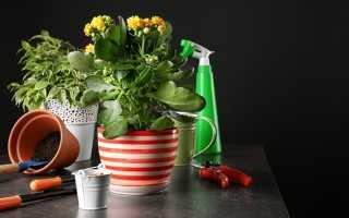 Мошки на комнатных цветах: как избавиться
