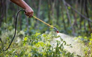 Надежная защита урожая картофеля: источники заболеваний и профилактика