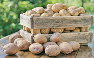 Выращивание картофеля по методу Галины Кизимы: основные правила