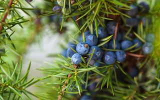 Какие деревья следует высаживать около дома — приметы от наших бабушек