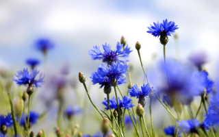 Сам себе цветовод: десяток цветов-самосевок