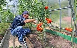 Правильное формирование томатов