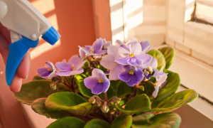 Как избавиться от неприятных мошек на листьях комнатных растений
