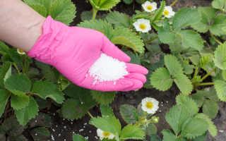 Осенняя обработка сада и огорода мочевиной: зачем нужна и как проводить