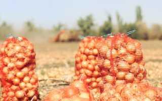 Советы по увеличению урожая лука