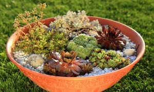 Декор для маленького сада: компактные (низкорослые) декоративные кустарники для рокария и альпийской горки