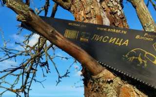Способы обрезки деревьев: особенности и назначение