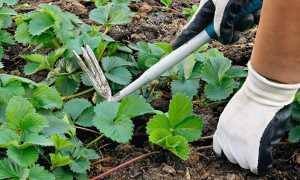 Избавляемся от сорняков: 4 способа борьбы
