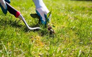 Как бороться с сорняками на даче: проверенные способы