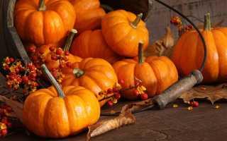 5 хитростей выращивания бахчи на своем участке