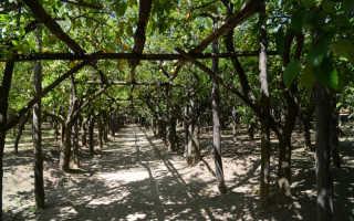 Самостоятельное изготовление подпорок для веток деревьев и их разновидности