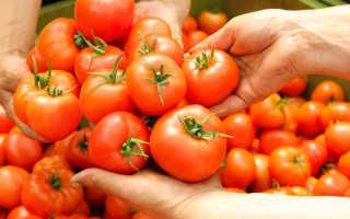 Сорта томатов для засушливой местности
