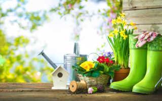 Эффективные осенние подкормки садовых цветов, которые я использую ежегодно. Мой цветник выглядит великолепно!