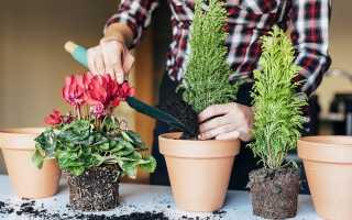 Роскошный цветник: советы по подкормке