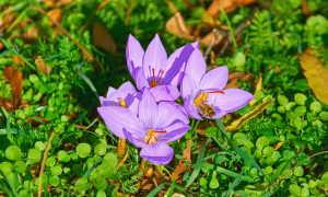 Осенние работы в саду: подзимний посев семян цветов