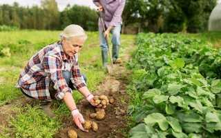 Правила посадки и ухода за картофелем