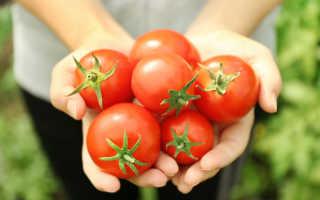 Преимущества культивации низкорослых помидоров