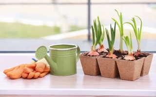 Выращивание рассады овощей в комнатных условиях