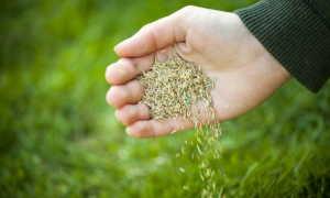 Быстро и качественно готовим новый участок к посеву