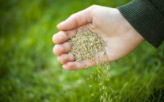 Обзор семян с «Алиэкспресс» — что выросло