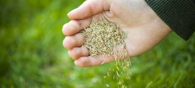 Сеем газон весной и осенью, учитывая особенности сезона