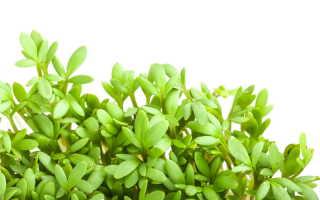 Улитка как способ выращивания рассады