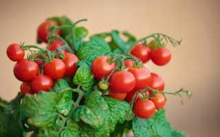 5 лучших ампельных сортов томатов