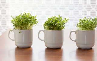 Свежая зелень под рукой: какие растения можно вырастить на подоконнике