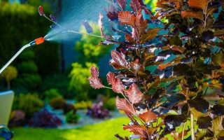Весенние садовые работы: опрыскивание и побелка плодовых деревьев