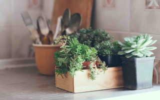 10 комнатных растений, с которыми вы забудете, что такое полив и подкормка