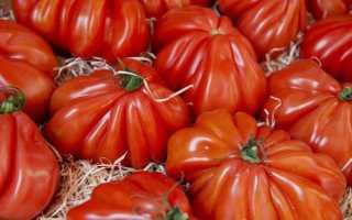 10 сортов гигантских помидоров — один плод на всю семью