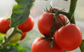 Щедрый урожай без особых усилий: лучшие сорта неприхотливых томатов