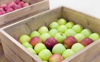 Причины редкого плодоношения яблони