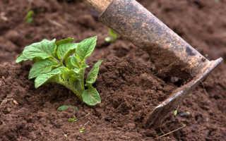 Окучивание овощей — каким растениям полезно, а какие не нуждаются в этой процедуре