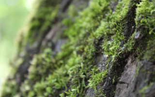 Избавляемся от лишайников и мха в саду: легко, быстро, дешево