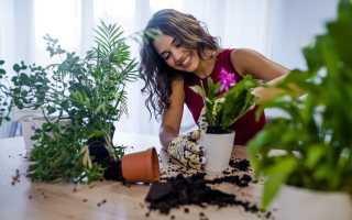 Скручиваются листья у растений: причины и устранение