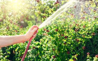 Средства для обработки ягодных кустарников от насекомых и инфекций ранней весной