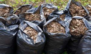 Опавшая листва в саду: нужно ли ее убирать по осени и как это лучше сделать