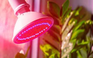 Лампы для подсветки растений: зачем нужны и какие существуют