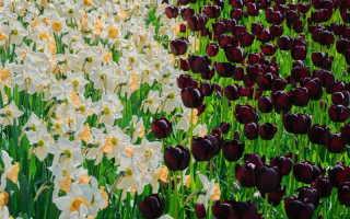 Очарование сада: обзор многолетних садовых цветов, которые покоряют своей красотой