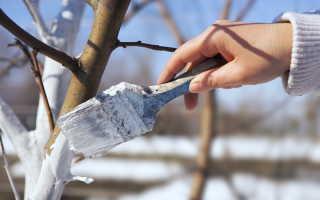 Белим деревья в саду: приготовление и правильное применение известковых растворов