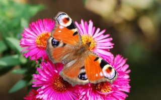 Какие цветочные культуры можно высаживать осенью под зиму