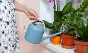 Возможность полива комнатных цветов минеральной водой и его особенности