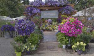Вьющиеся цветы для декорирования дачного участка