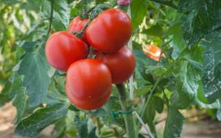 Выращивание томатов: что нужно учесть