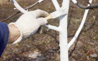 Побелка садовых деревьев осенью: когда, как и чем побелить